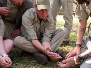 James met baboon spider