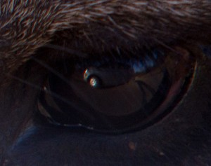 In the eye of the hyena