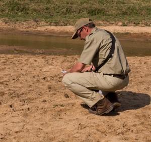 Ik worstel met de vraag van welk geslacht de leeuw was wiens pootafdruk hier in het zand stond. Gelukkig goed beantwoord...
