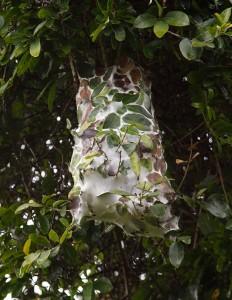 Quizvraag van vandaag: wat is dit, wat hoog in de boom hangt?! (wij weten het echt niet)