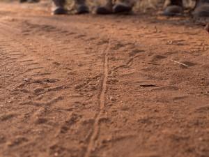 Cobus vindt een spoor van (waarschijnlijk) een Gecko