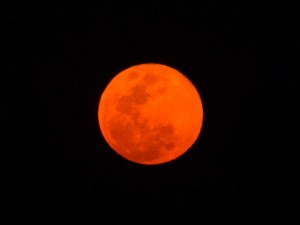 Moon over Makalali, part 2