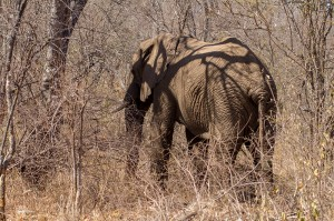 Vandaag weer eens olifanten gezien, die helaas op afstand gehouden werden door een safari-te-paard groep