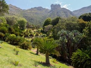 Jurassic Park? Nee, Kirstenbosch Botanical Garden