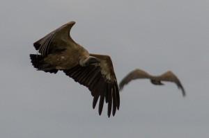 ... terwijl er boven zijn hoofd steeds meer aan komen vliegen