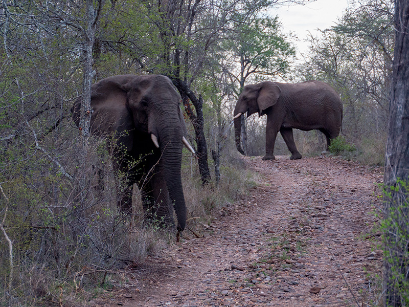 We verlaten de olifanten weer, in de achteruit