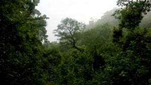Afro-montane forest in de Magoebaskloof