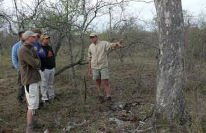 Hier leg ik aan James, Andy, Matt en Lawrence uit hoe een olifant de schors van een boom sloopt...