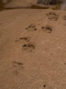 ... en verse sporen van een nijlpaard
