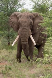 We komen olifanten tegen...