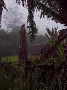 Het weer levert sfeervolle plaatjes op in de tuin van de kaasfarm