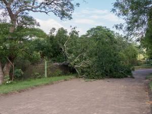 De omgevallen boom...