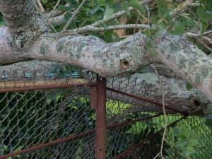... landde precies op een ijzeren paal waardoor het hek gespaard bleef