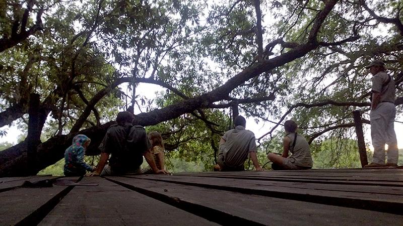 Een plateau van 6x6 meter op een meter of vijf hoog tegen een enorme boom aan en met uitzicht op de rivier... wat wil je nog meer